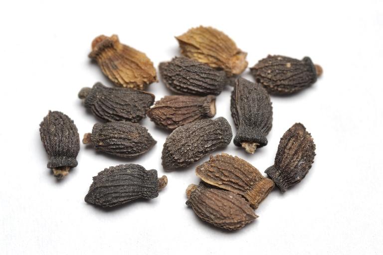 Borage, seeds